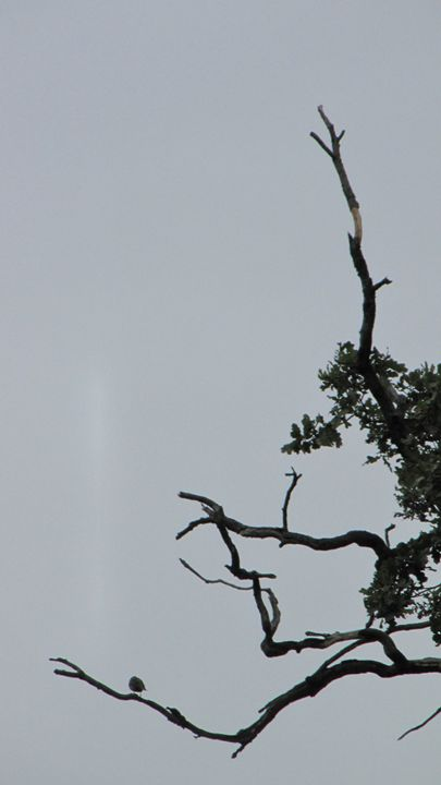 birdy - dariusmorgendorfer