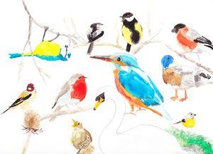 British Wild Birds