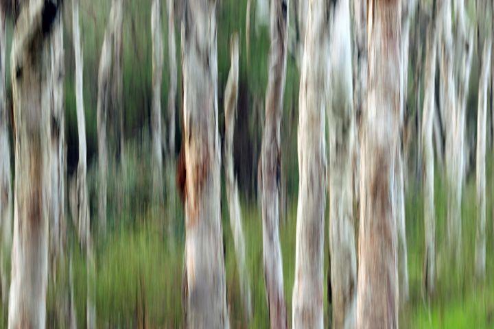 Tree abstract - Anita Underwood Photography