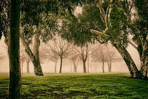 Foggy parklands