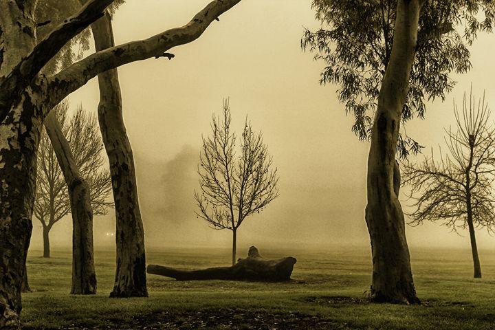 Beyond the fog - Anita Underwood Photography