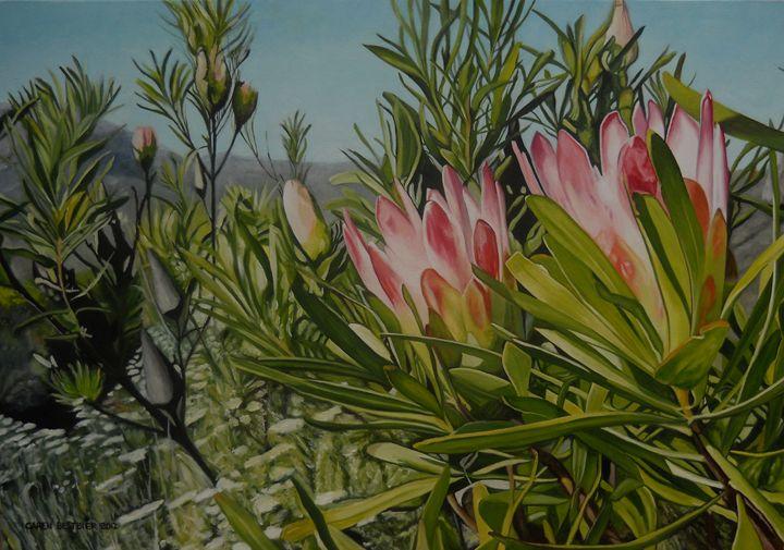 Proteas - Caren Bestbier Art