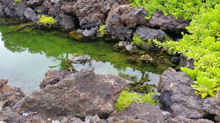 Hawaii Stream Collection - C. G. P.