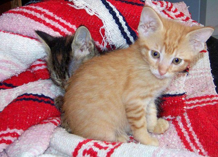 kittens - TiffanyWright