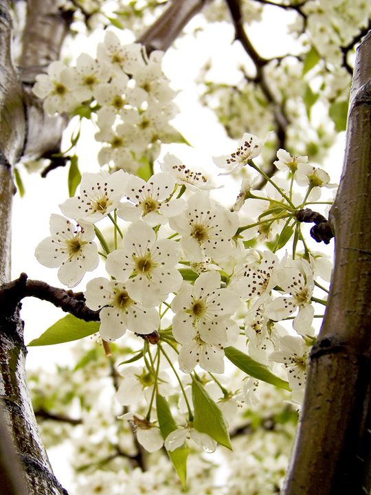 Spring - TiffanyWright