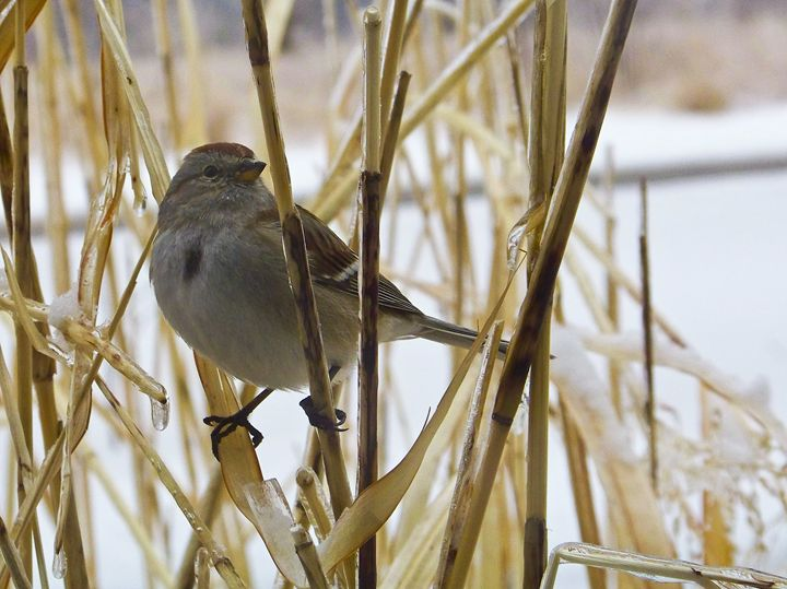 Winter Bird - TiffanyWright