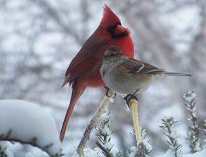 Winter Birds - TiffanyWright