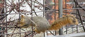 Squirrel 2