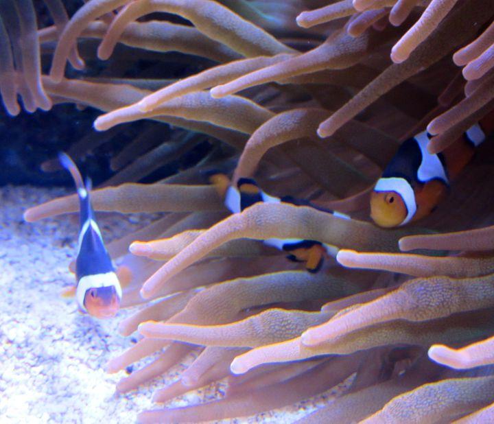 Nemo & Friends - TiffanyWright