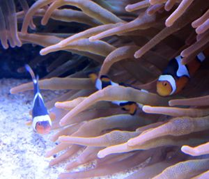 Nemo & Friends