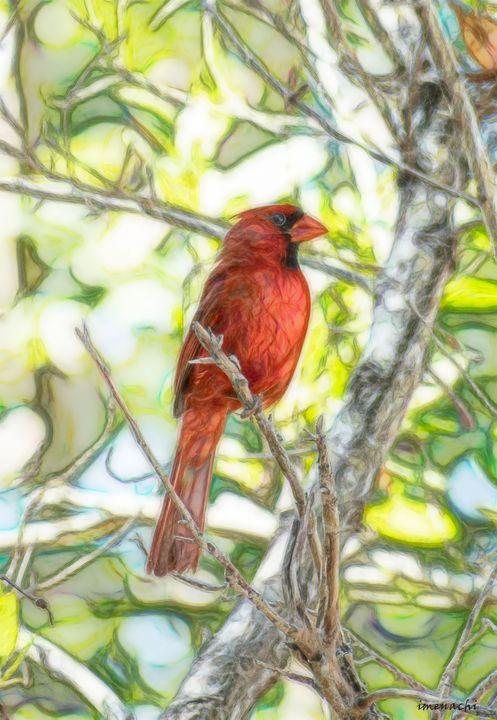 Red bird in the tree - imenachi