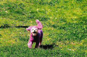 Puppy Power - PonyBones Portraits