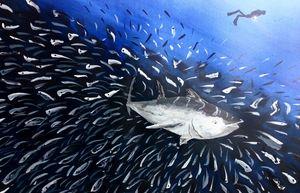 Tuna attack