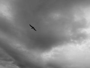 bird in the sky - CaitsCaptures