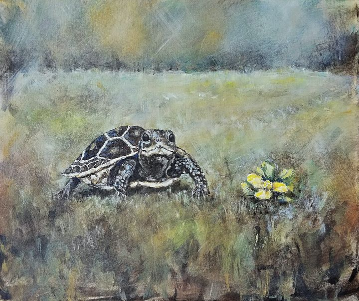 The Turtle and the Flower - Studio LaSalle