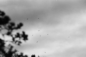 In The Sky - Christopher Dahr