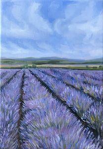 Lavender field 2