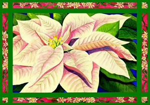 Christmas Poinsettia - Janis Ilene Images