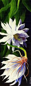 Night-Blooming Cereus - Janis Ilene Images