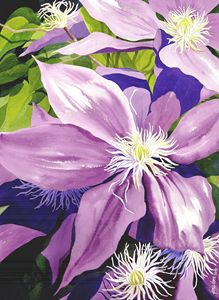 Purple Clematis in Sunlight - Janis Ilene Images