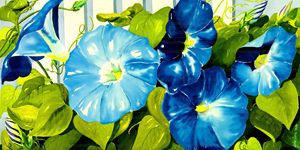 Morning Glories in sunlight - Janis Ilene Images