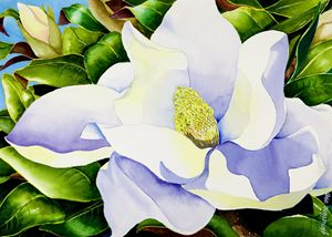 Magnolia in Leaves - Janis Ilene Images