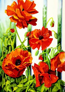 Spring Poppies - Janis Ilene Images
