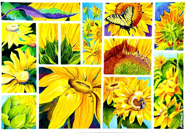Scenes of Sunflowers - Janis Ilene Images
