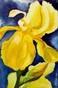 Grandma's Yellow Iris