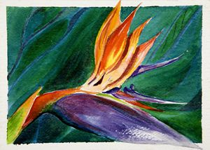 Bird of Paradise - Janis Ilene Images