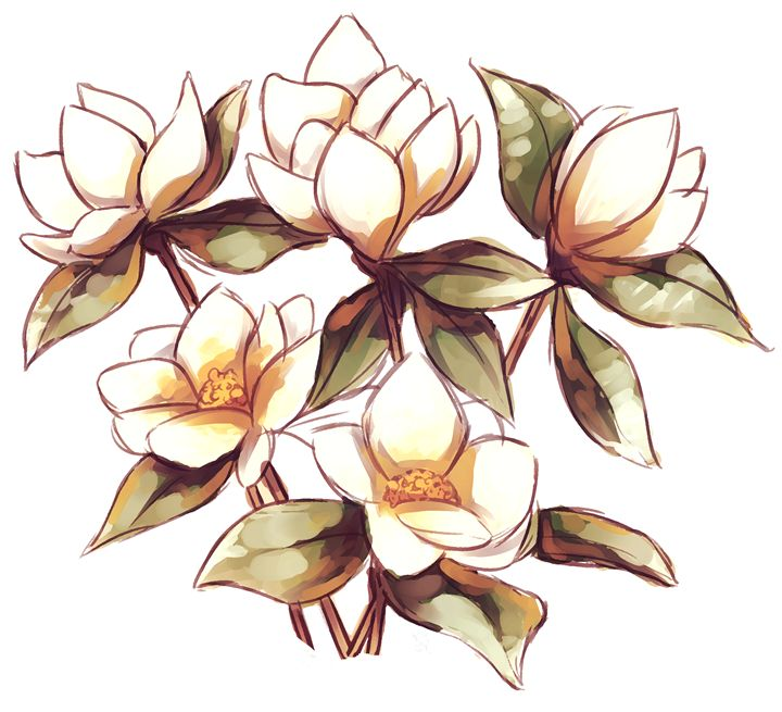 Magnolias - Ashton Sunseri Illustration and Painting
