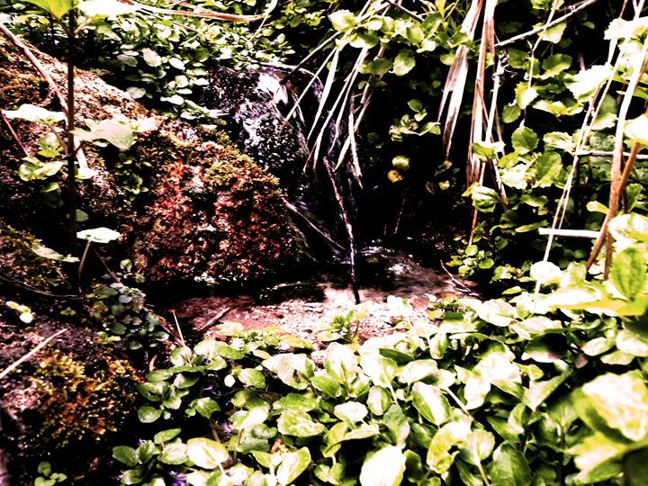 deep forest water fall - donny d's art store