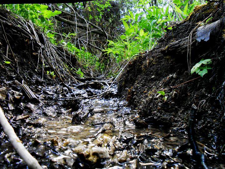 forest stream - donny d's art store