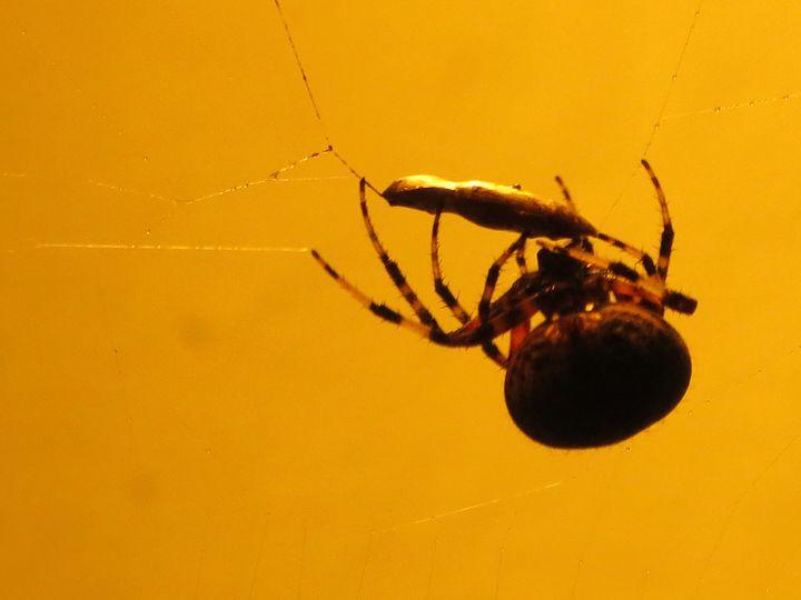 Spider Dinner - Haley Riggle