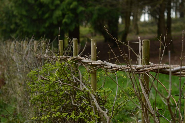 Wooden Fence - Casey Houston Photography