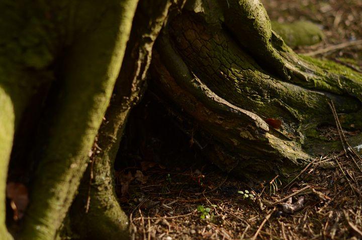 Tree Trunk - Casey Houston Photography