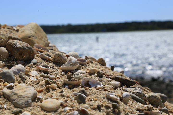sand shells and rocks at jaws bridge - Brooklyn Xpressions