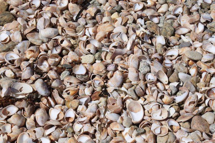 sea shells - Brooklyn Xpressions