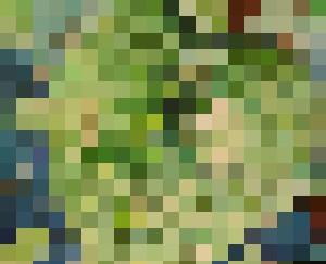 Leaves - Julie Lin