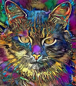 Kittyboo,60x68 cm, cat