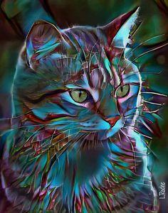 Amanda boréale - cat, 70 x 50 cm