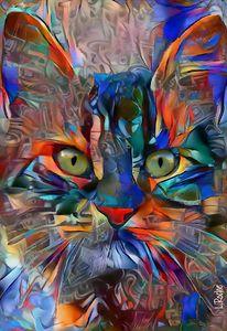 Harry funky, cat -70x48 cm