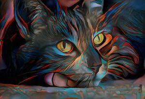 Patxi, cat - 80 x 55 cm