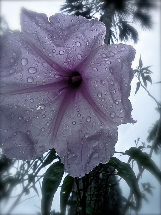 After the Rain 2 - Karina Simmons Luna