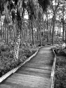 Boardwalk in black and white 2