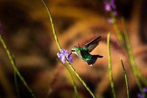 Hummingbird #2 - Gianmarco Broilo