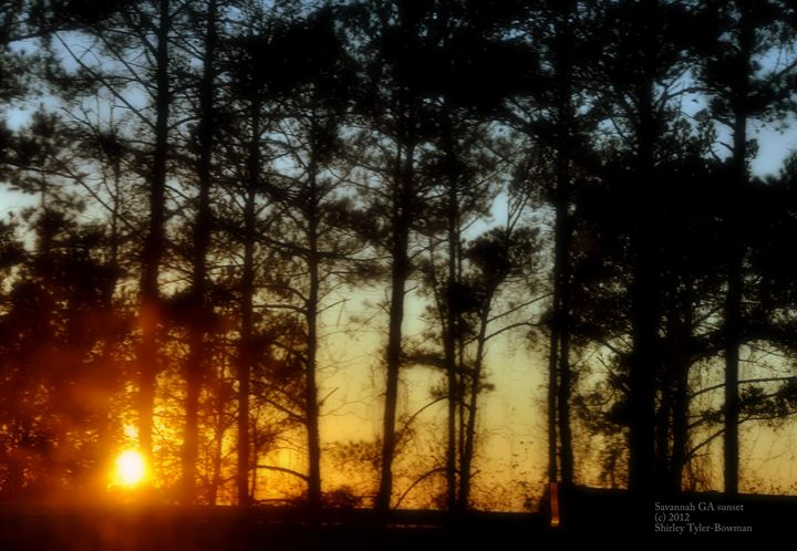 A Sunsetting Amidst the Trees - Shirleypix Art & Photography