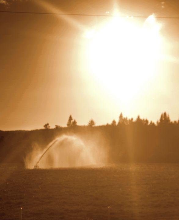 Watering Sun - Shirleypix Art & Photography