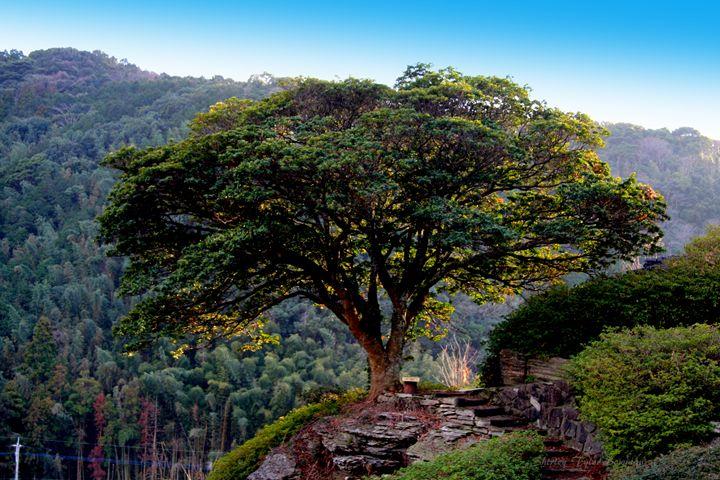 Tree - Shirleypix Art & Photography