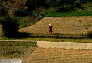 Farming - Working the fields